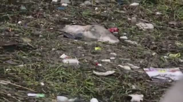 China Pulls Nearly 6,000 Dead Pigs From River