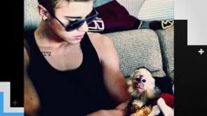 Justin Bieber's Monkey Gets Quarantined