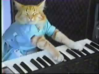 Keyboard Cat! Of Charlie Schmidt -THE ORIGINAL!