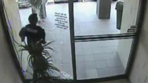 Purse Snatcher Smashes Through Glass Door