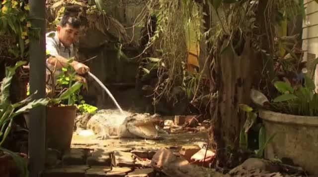 Crocodiles Used to Guard Thai Family's Home