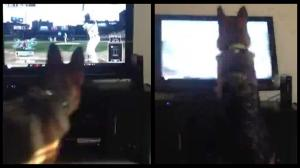 German Shepherd Tries To Catch Baseball on TV