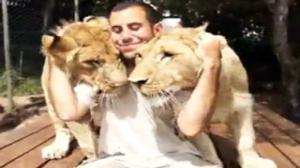 Lion Cuddler