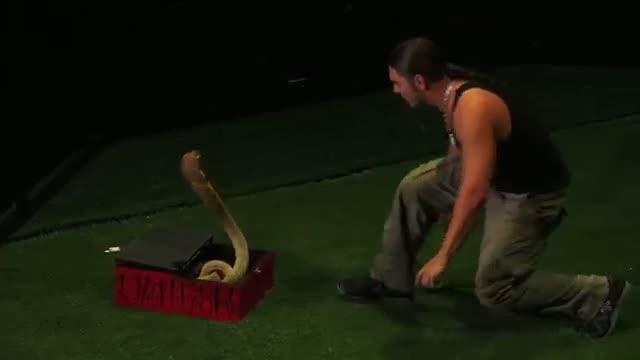David the Cobra Kid - Attempts to Kiss a 15 - Foot Cobra Snake! -- America's Got Talent 2013