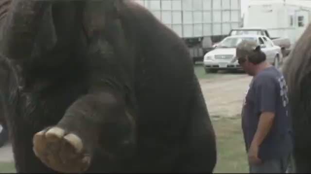 Iowa Firefighters Help Clean Elephants