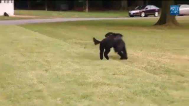 White House Unveils New Obama Dog, Sunny