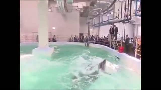 Putin Meets Sea Creatures