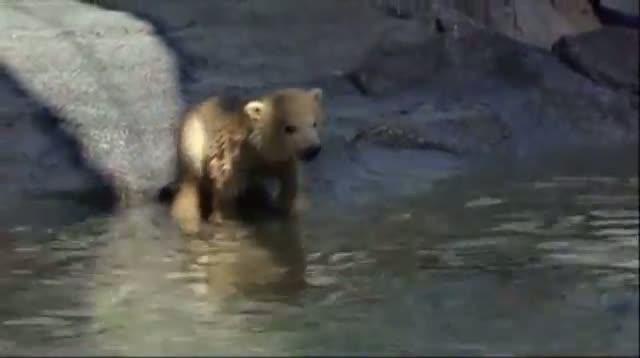 Polar Bear Cub's Debut at Aussie Zoo
