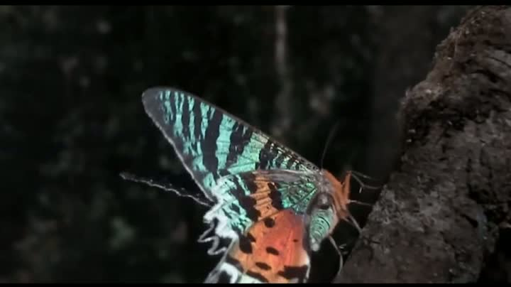 The Coolest Nature Video Ever