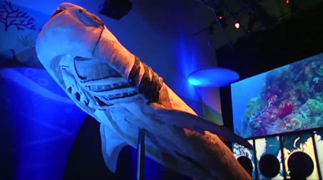 New Angle on 'Sea Monsters' at Georgia Aquarium