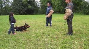 German Shepherd Guard Dog Practices Protecting Five Year Old