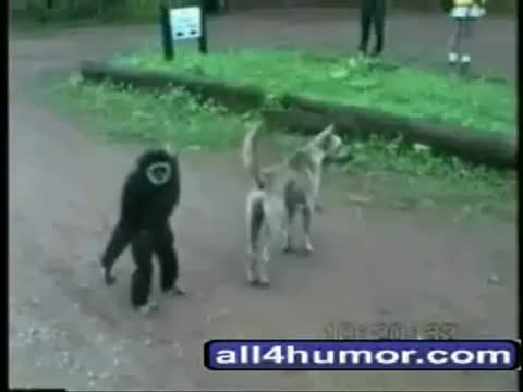 Funny Animals Video