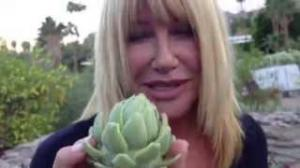 Suzanne Somers' First Artichokes of the Season!