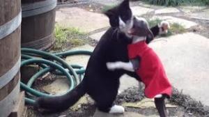 Funniest Cat vs Dog Fighting Videos