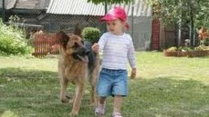 Funny Babies with Funny Dog German Shepherd Videos