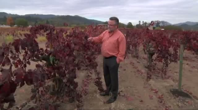 Sour Grapes? Wine Lovers Worry About Shortages