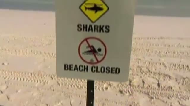 Tagged Sharks Trigger Tweets for Aussie Swimmers