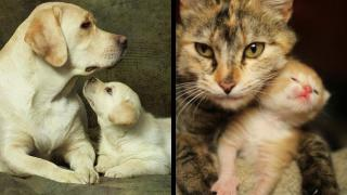 The Difference Between Dogs' and Cats' Teaching Styles