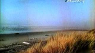 Beached Whale Explosion -  Destroyed in Seconds Video