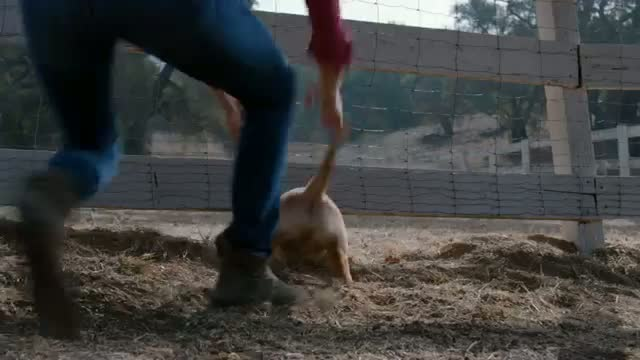 "Budweiser Super Bowl XLVIII Commercial - ""Puppy Love"" Video"