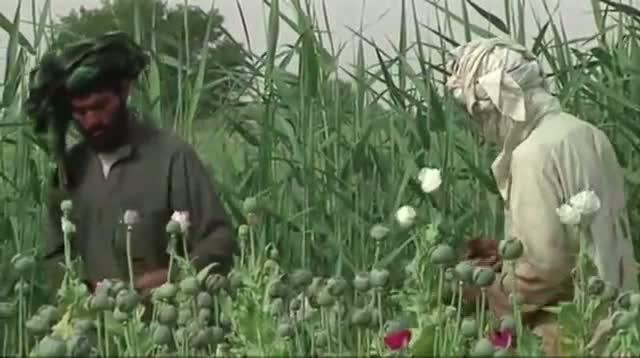 Afghanistan Seeing Bumper Crop in Opium