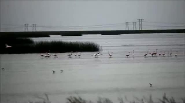Wild Flamingos Flock to South Florida