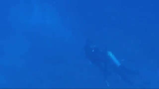 Hawaii Scuba Divers Face Off Over Aquarium Fish