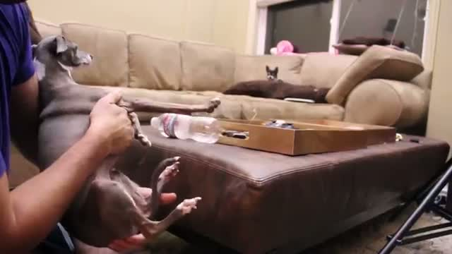 Jenna Marbles: How to Mildly Annoy Your Dogs Part 2