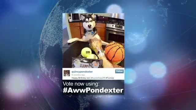 "2014 NBA Social Media Awards ""Aww"" Award Nominee: Quincy Pondexter"