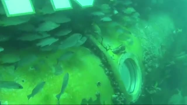 Fabien Cousteau Emerges After Month Underwater