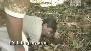 Anaconda Attacks TV Host