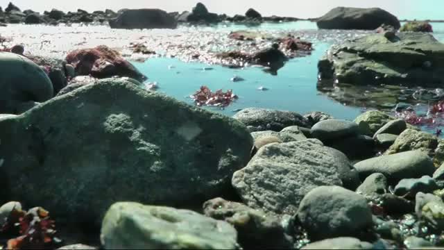 Gulf of Maine a Symbol of Warming Oceans