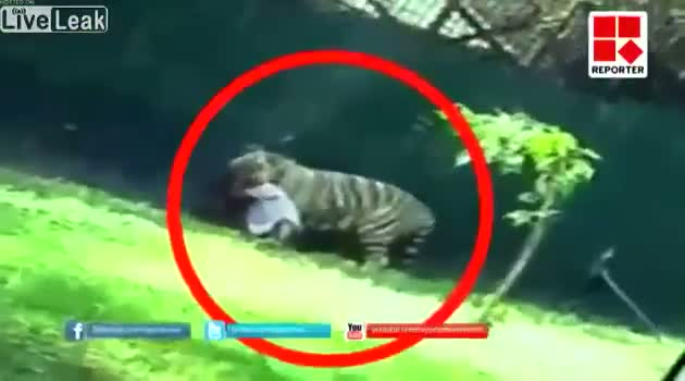 #KillATiger - White Tiger Kills Student at Delhi Zoo CAUGHT ON TAPE