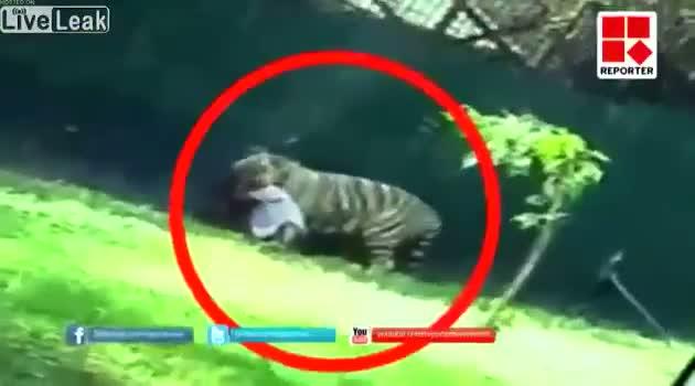 White Tiger Kills Student Who Fell Into Its Enclosure At