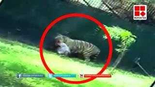 RAW Footage White tiger dragging class 12 student inside Delhi zoo - #KillATiger