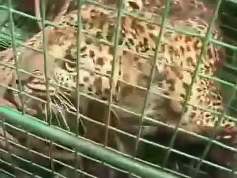 White Tiger Kills Student Who Fell Into Its Enclosure At Delhi Zoo - #KillATiger