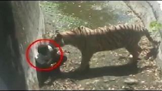White Tiger kills youth inside Delhi Zoo - #KillATiger