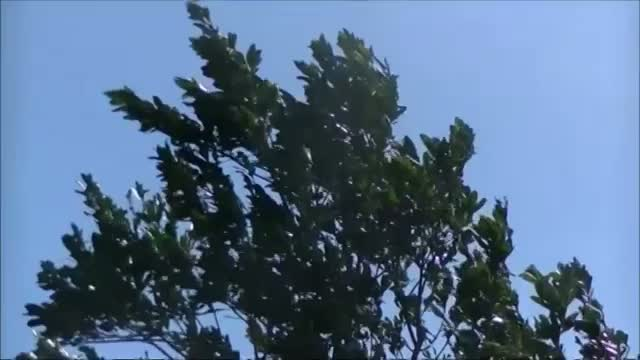 Downed Trees, Blocked Roads After Gonzalo
