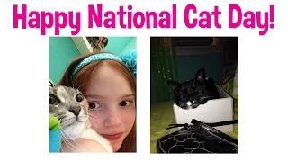 CatPaw Goes to Disney World | Happy National Cat Day