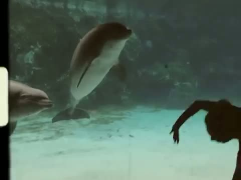 Girl Makes Dolphin Laugh (EXTENDED)