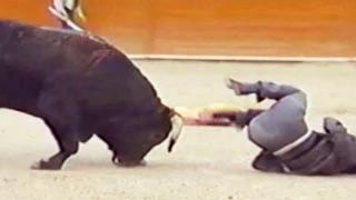 Funny Animal Accidents Funny Fail Compilation videos 2014