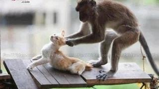 Funny Animals YouTube Funny videos clips, Funny pranks, funny fails