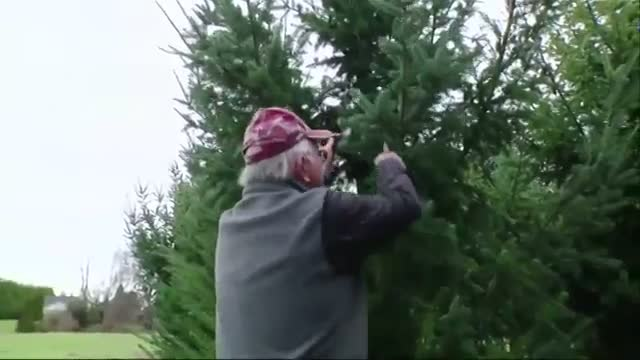 Breeding Christmas Trees Without Needle Mess Video