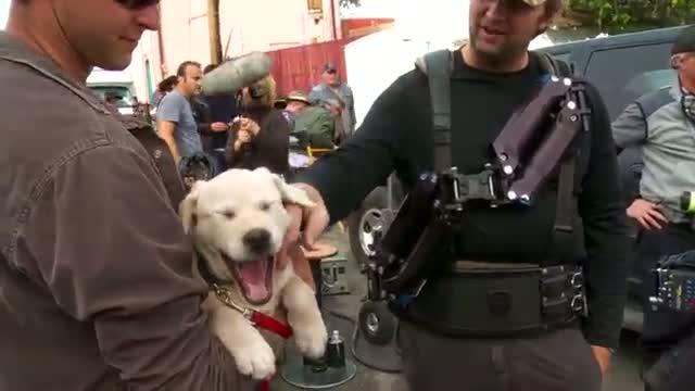 "2015 Budweiser Super Bowl Commercial ""Lost Dog""   Meet the Puppy   Budweiser"