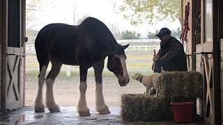 "2015 Budweiser Super Bowl Commercial ""Lost Dog""   Budweiser"