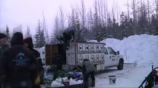 Iditarod Begins on New Route Across Alaska