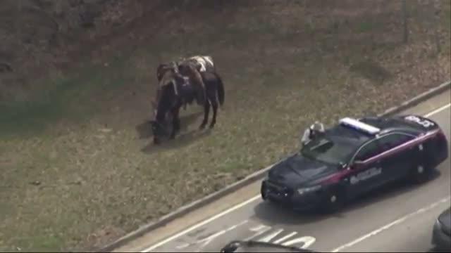 Man Rides Horse on Atlanta Freeway