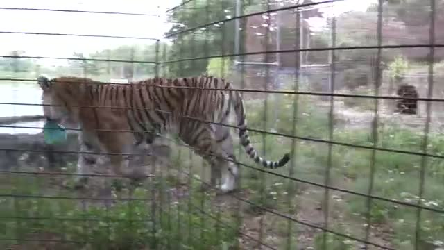 Earth Day At Big Cat Rescue
