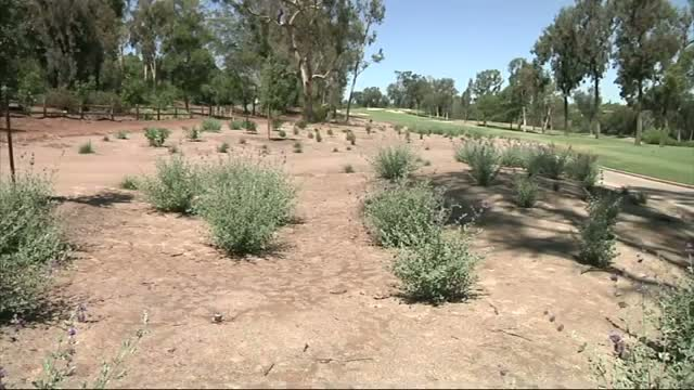 Calif. Golf Courses Rip Up Grass During Drought