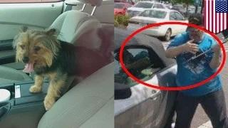 Dog rescue: Veteran breaks car window to save dog from hot Mustang and gets arrested
